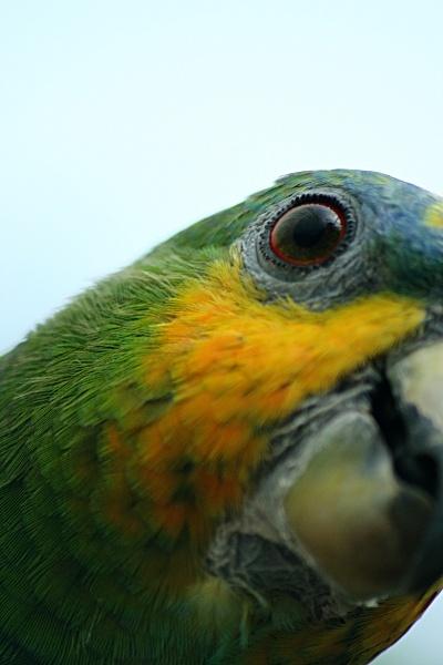 Eye of the Parrot by stevenclark