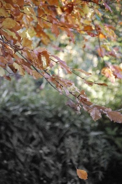 Falling Leaf by BobFancy