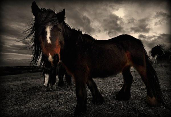 Gypsy Horse by bwillik
