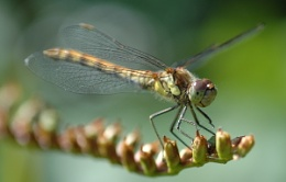 Dragonfly!!!!!