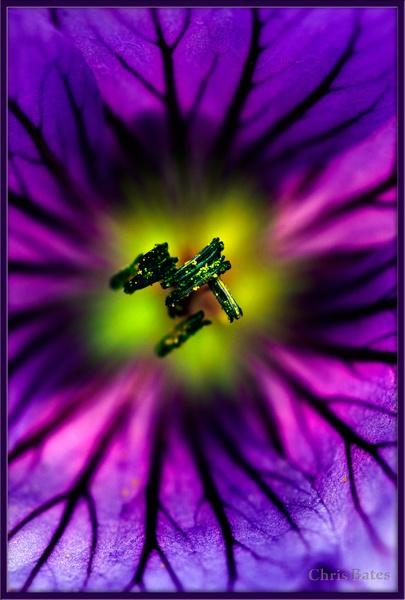 Purple by heliflyer