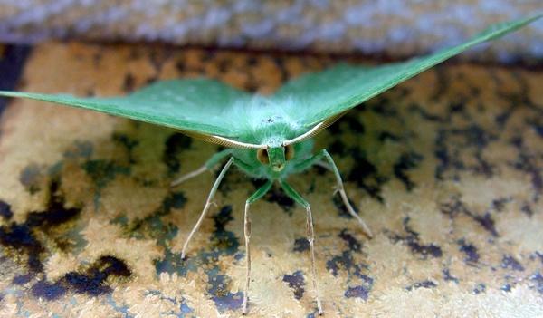 Moth by PaulinAus