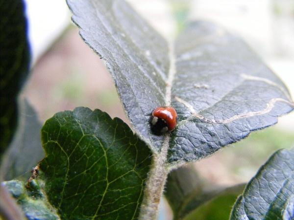 ladybird by minimitch