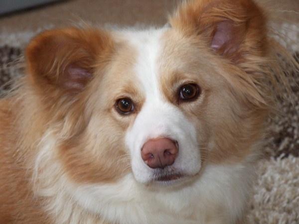my dog by flickchick