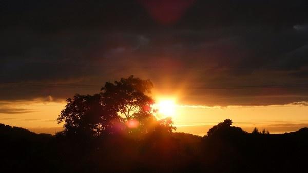 Garden Sunset by Carrera_c