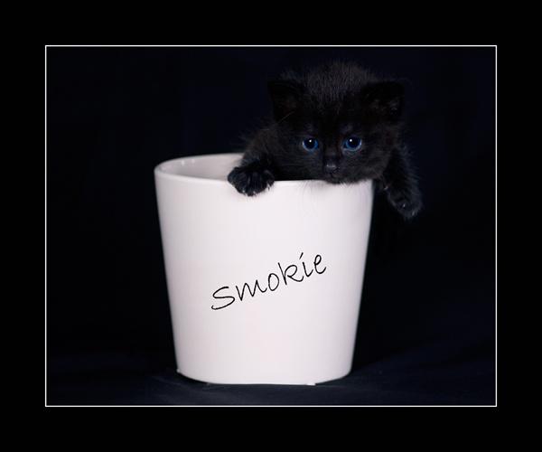 Smokie by bigheart.