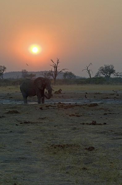 Sunset at Chobe Waterhole, Botswana by jennialexander