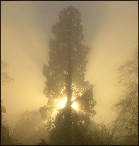 Misty sun by johnhiggins