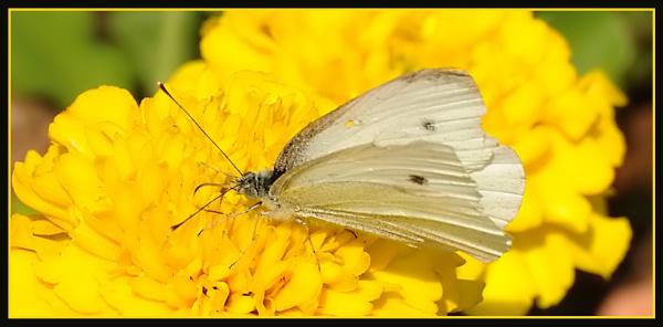 Butterfly No3 by m3lem