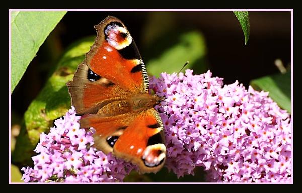 Butterfly No 4 by m3lem