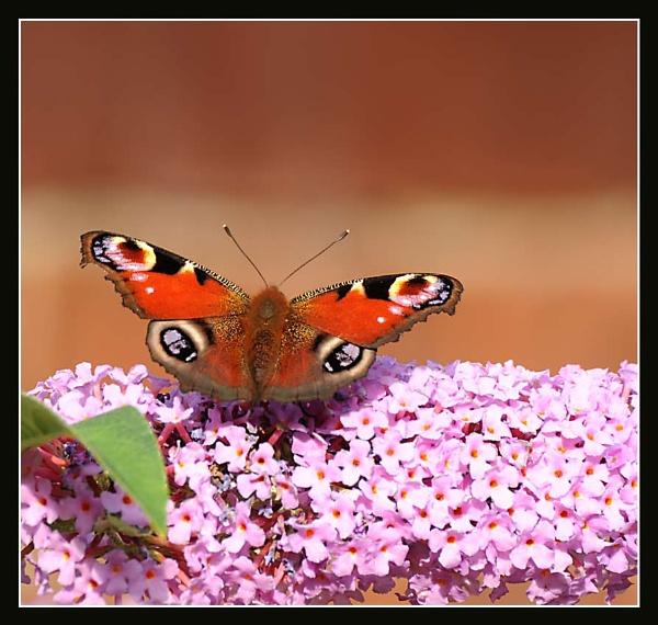 Butterfly No 6 by m3lem
