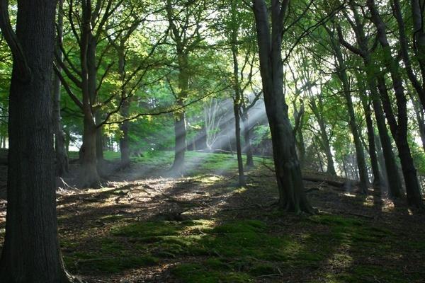 Sunbeams by Stonemushroom