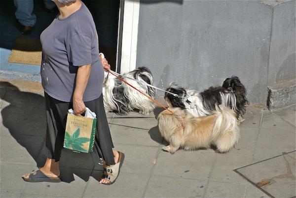 Walking the dogs by JasperD