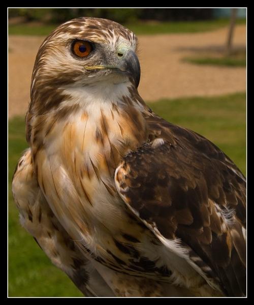Bird of Prey by dave1207