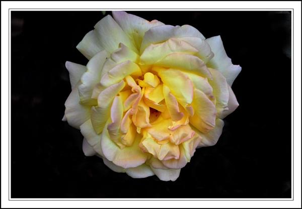 Flowers by BERTRAM