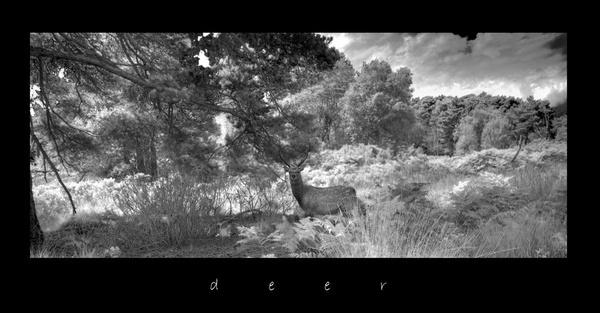 Deer by moonlightallan