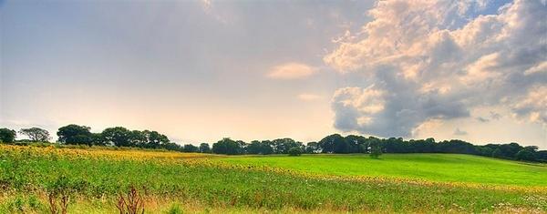 Fields of Joy by moonlightallan