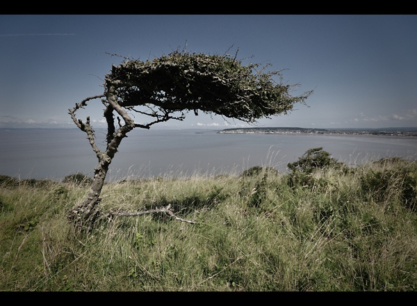 Wind Swept by Brizzle