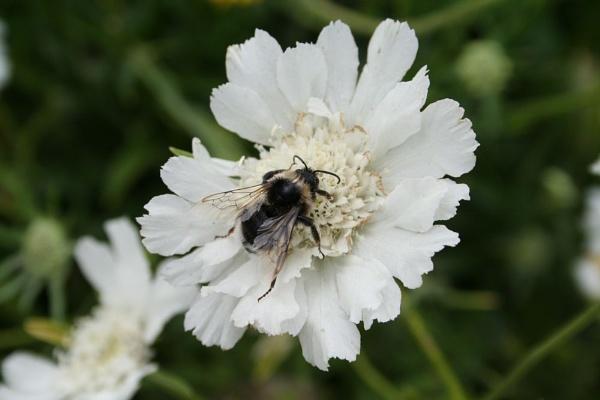 bees by samknox