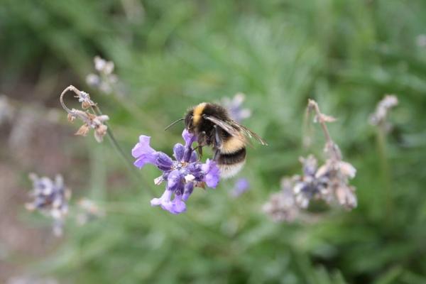 more bees by samknox