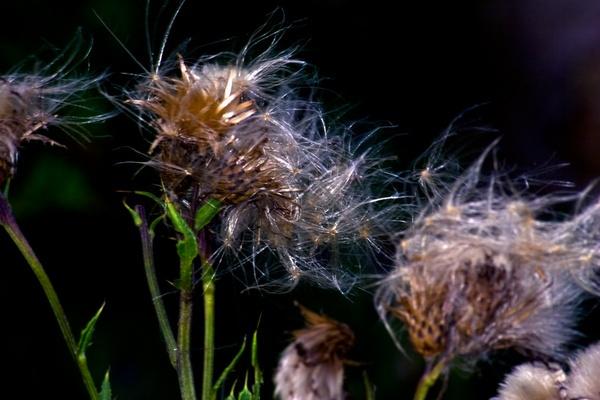 Wind Blow\'s by HuntedDragon