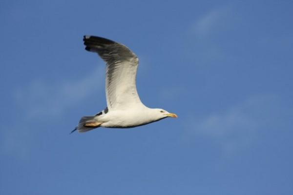 Seagull by mio2mio