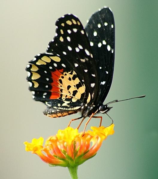 Butterfly by stevenclark