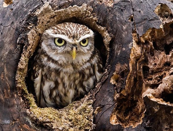 Little Owl 2 by Lorraine_Wallace