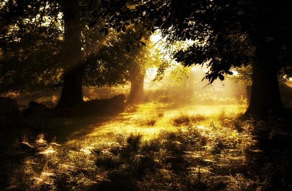 Golden Sunlight by bridge99