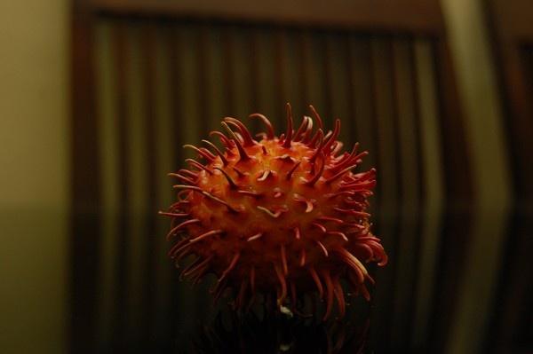 Rambutan Fruit by johnMathew