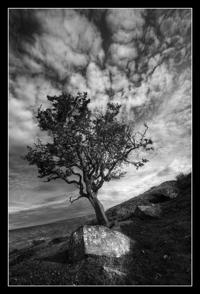 Crooked Tree by iansnowdon