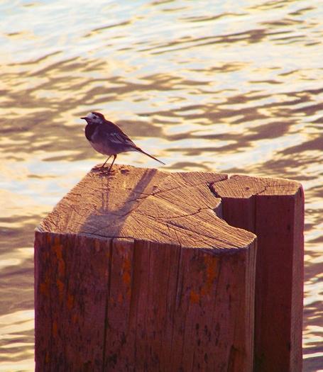 Watchin\' the Water Flow by Alska