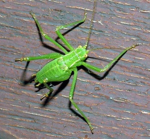 Bug by PaulinAus
