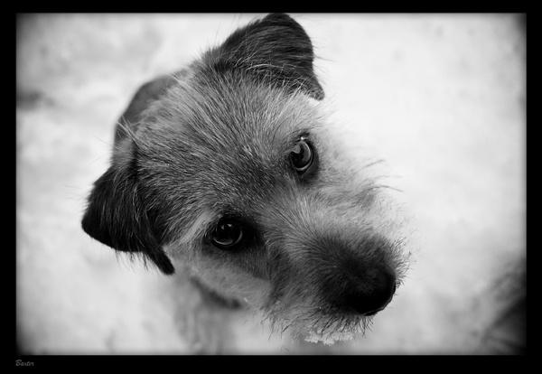 Baxter by AllyBoy