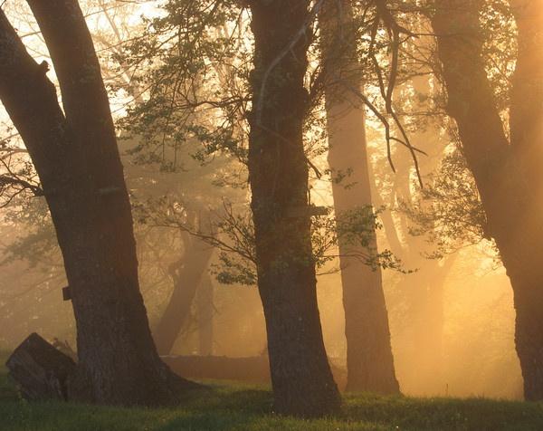 Sunny Morning Mist by Gecko