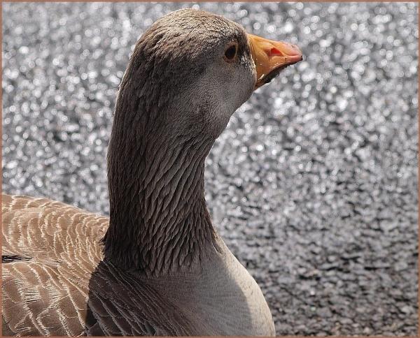 Goose by Mikelane
