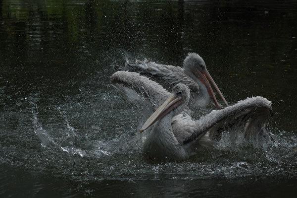 splashing about by ian_b