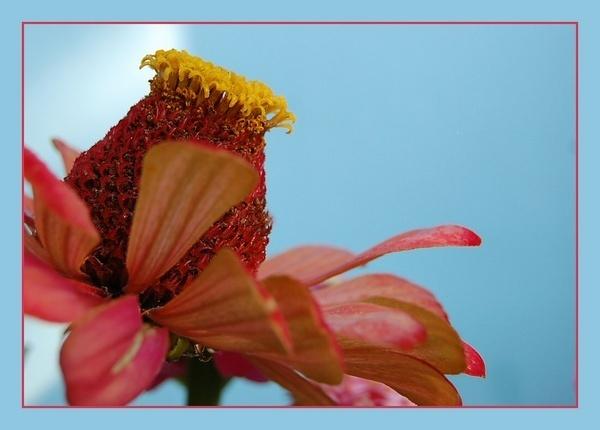 my sister\'s flower by CherryMartin