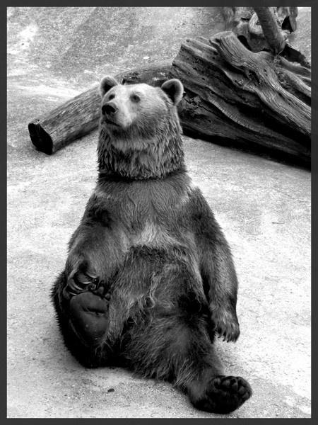(Yoga) Bear by xanita