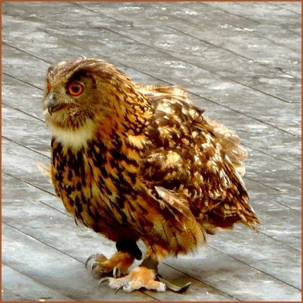 Owwl by xanita