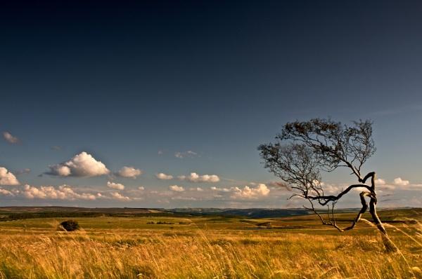 Derbyshire Prairies... by alansdottir