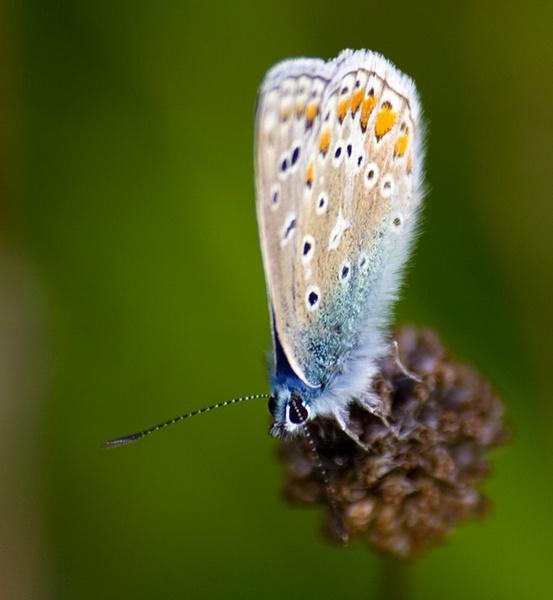 Butterfly by HuntedDragon