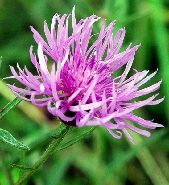 FLOWER by darrennmel