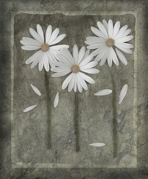 Flowers by Vikki_R