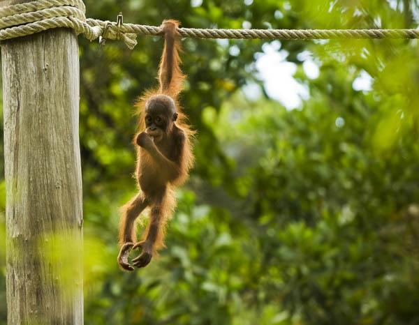 Hanging Around by fazzer
