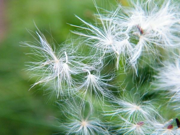blowing in the wind by rsjkinson