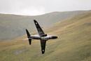 Low Flying Hawk