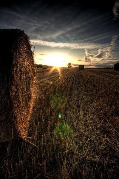 Harvest by bwillik