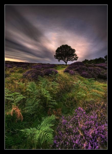 Into the light ( North York Moors) by iansnowdon