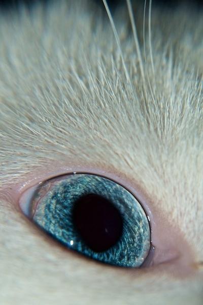 Cats Eye by Carrera_c
